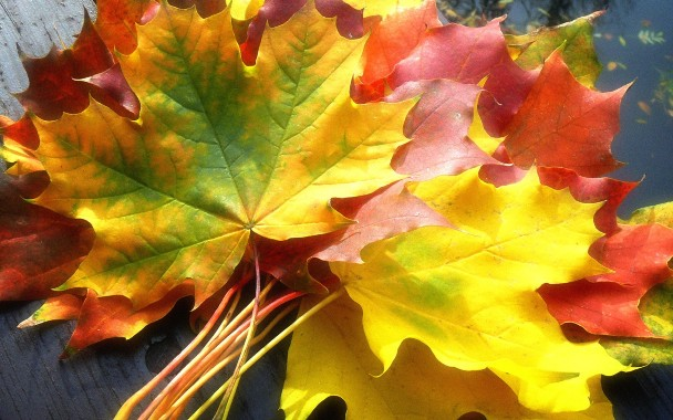 Nature_Seasons_Autumn_Gifts_of_Autumn_018523_.jpg